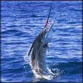 Видео о рыбалке
