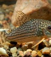 Редкие и исчезающие виды рыб