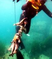 Египет глазами подводного охотника | Моноласта