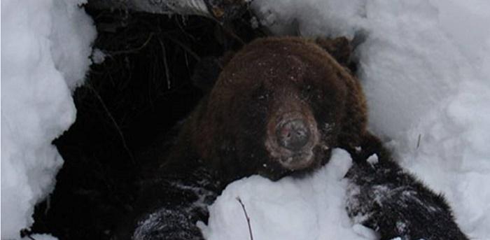 ohota-na-medveda-berloga